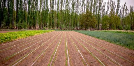 Preadjudican 90 hectáreas para emprendimientos productivos en el área Arroyito-Senillosa