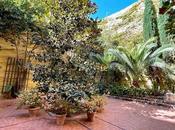 Palacio condesa Lebrija (7): Patio palmeras.