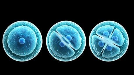 Endosimbiosis: La Estrategia de la Vida para Perpetuarse