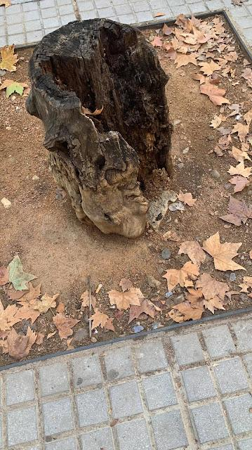 Un árbol muerto