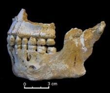 """""""Neandertales. La vida, la muerte y el arte de nuestros primos lejanos"""", de Rebecca Wragg Sykes"""