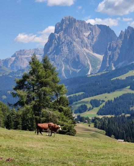 alpe-di-suisi-idilico-paisaje