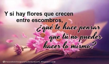Y si hay flores que crecen entre escombros, ¿qué te hace pensar que tú no puedes hacer lo mismo?