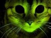 Investigadores Clínica Mayo crean unos felinos genéticamente modificados resisten SIDA