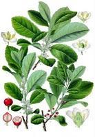 Fitoterapia, plantas medicinales y energía