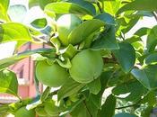 kakis, frutas favoritas