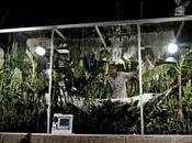 Fotosíntesis, Experimento Plantas