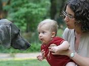 Cómo preparar perro para llegada bebé casa