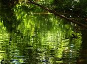 hechizado aguas...