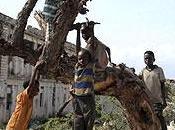 (296) Árboles: cruciales para evitar otra hambruna África