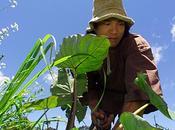 Living PoNo: vida natural actor Jason Scott Hawaii (vídeo)