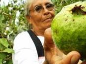 Salvadoreñas lucha verde seguridad alimentaria