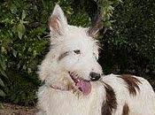 Gonzo, palabra define este cachorro ESPECTACULAR