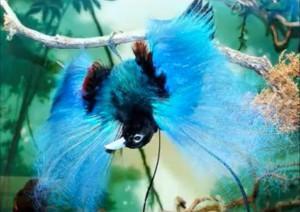 ave paraiso