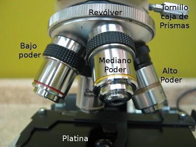 Partes del Microscopio óptico y su función