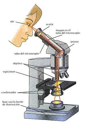 Partes del Microscopio óptico y su función - Paperblog