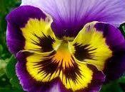 Otoño, Flores Plantas