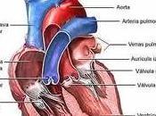 Corazón Pez: Crean Válvula Cardíaca Tejidos Animales Acuáticos