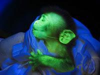 La fluorescencia camina a nuestro lado.