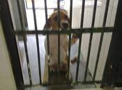 Camaron imagen desesperación cachorro beagle (perrera Sevilla)