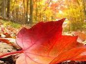 otoño meteorología alma