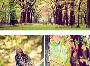 llegado otoño… Central Park