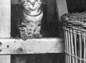 Heroico gatito Pyro mantuvo moral alta tripulación aérea segunda guerra mundial