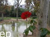 Roses tardor 2011, Sant Feliu Llobregat,