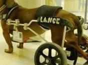 historia Lance