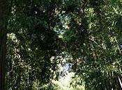 Bambouseraie Prafrance: entorno donde perderse