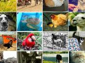 Animales mundo