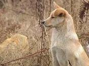 perro fiel China