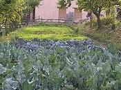 Alimentación orgánica: productos agricultura ecológica