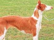 Piden diez meses carcel cazador matar perro paliza