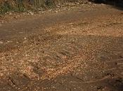 Afecciones plaguicidas agrícolas fauna silvestre.