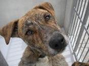 Doro encuentra perrera madrid necesita adopción urgentemente¡¡