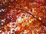 Jardines otoño