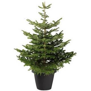 C mo se debe cuidar un rbol natural de navidad - Como se adorna un arbol de navidad ...