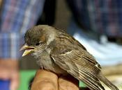 asombroso mundo aves