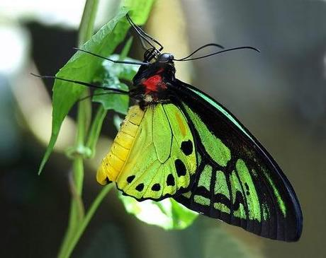 Insectos gigantes!
