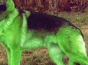 Sentirse como perro verde