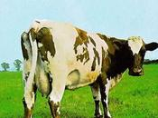 ATOM HEART MOTHER Pink Floyd (1970)