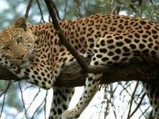 Planificacion safari detalle