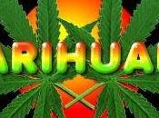 Tolerancia cannabis