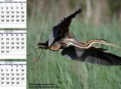 Calendario 2012 Segundo trimestre