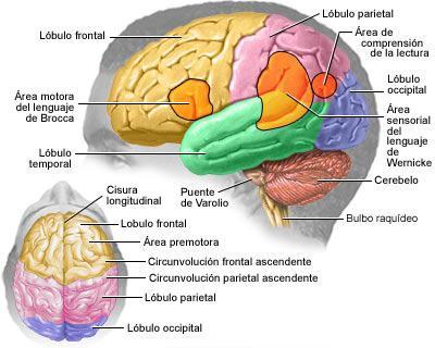 Cambios en el cerebro, cambios en la memoria en los adultos mayores