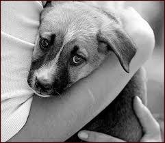 Los animales domésticos también tienen su corazoncito …