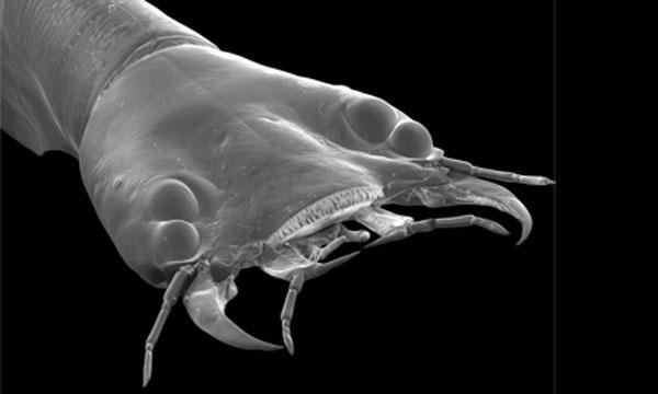 Los bifocales del escarabajo