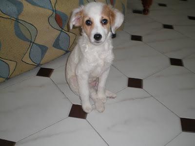 GUARDO: ¡¡¡Ayuda para el cachorro ALF, necesitamos adoptantes ¡¡¡ URGENTEMENTE !!!..