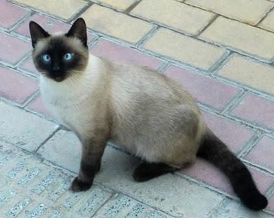 Travis precioso gatito en la calle (Murcia)